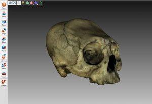 dundee_skull_696